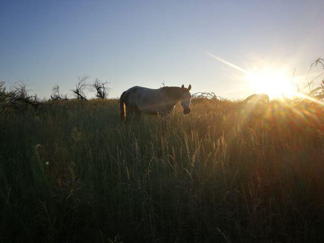 horse-riding-10